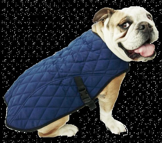 50aqpejapb_with-dog_01